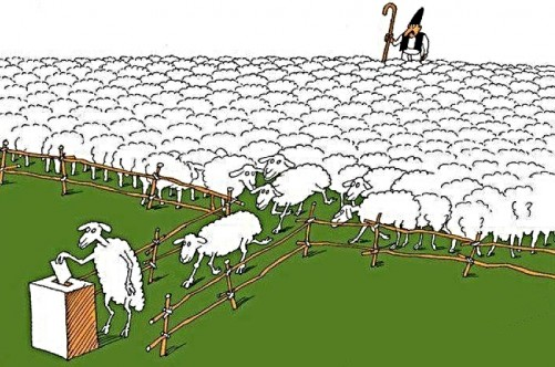 sheep-voting