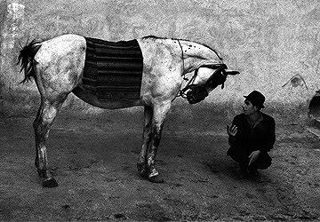 cigo-i-konj