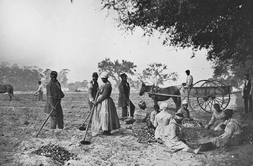james-hopkinsons_plantation_slaves_planting_sweet_potatoes