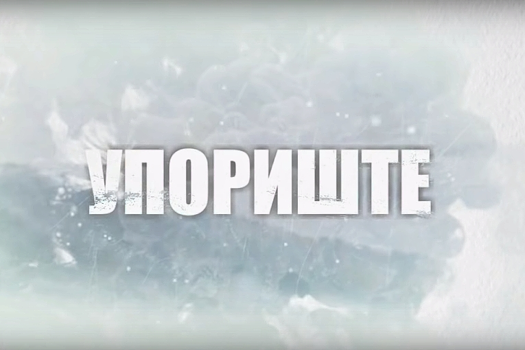 Никола Павловић: Крваве кошуље или жути прслуци?